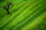 Fale zieleni.jpg